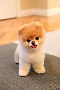 Süße Hunderassen Fotos 200x300 - Süße Hunderassen Fotos