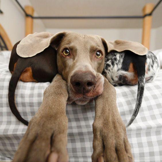Süße Hunderassen Mit Bild - Süße Hunderassen Mit Bild