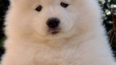 Süße Kleine Hunde Bilder Für Facebook 390x220 - Süße Kleine Hunde Bilder Für Facebook