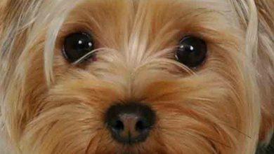 Süße Kleine Hunde Bilder Für Whatsapp 390x220 - Süße Kleine Hunde Bilder Für Whatsapp