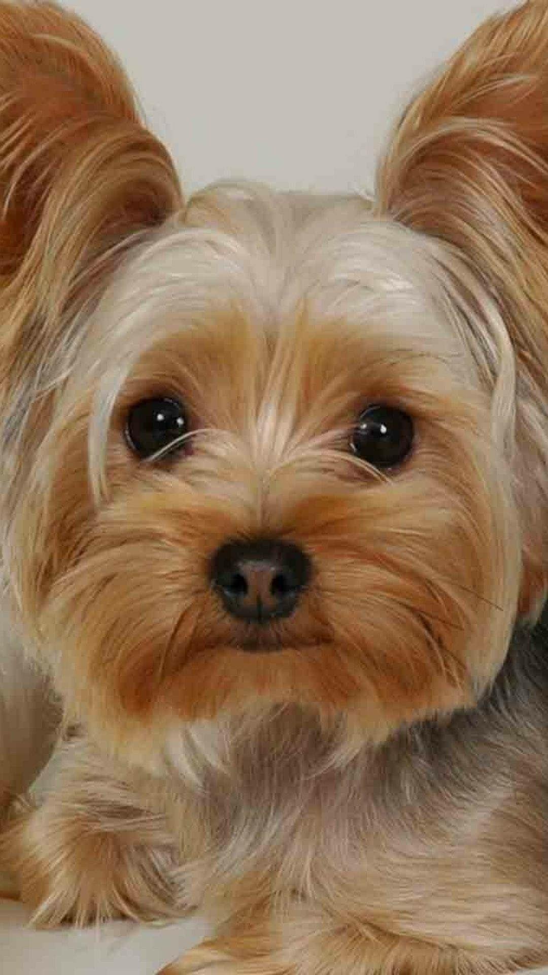 Süße Kleine Hunde Bilder Für Whatsapp - Süße Kleine Hunde Bilder Für Whatsapp