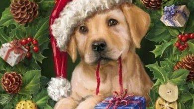 Süße Kleine Hunde Bilder Kostenlos Herunterladen 390x220 - Süße Kleine Hunde Bilder Kostenlos Herunterladen