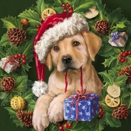 Süße Kleine Hunde Bilder Kostenlos Herunterladen - Süße Kleine Hunde Bilder Kostenlos Herunterladen