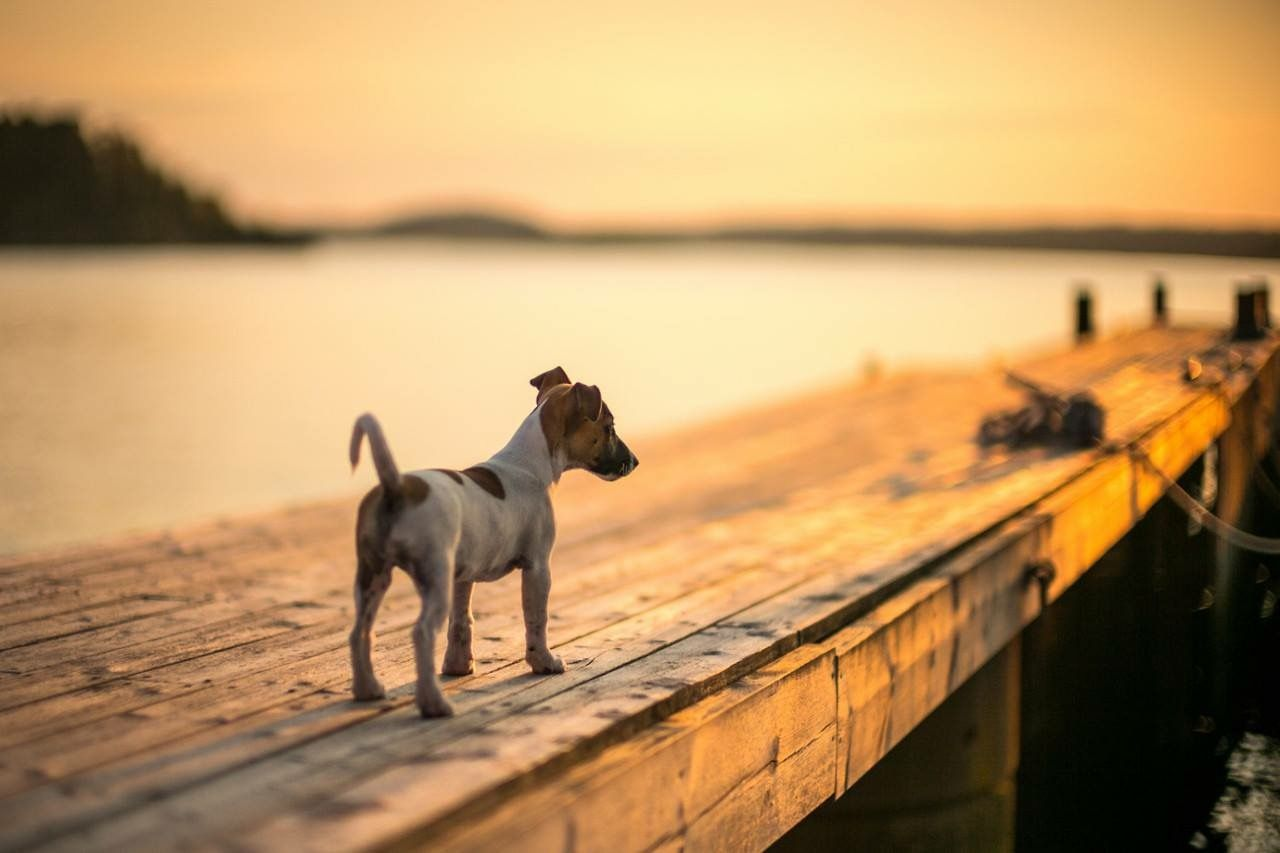 Schäferhund Ähnliche Rassen - Schäferhund Ähnliche Rassen
