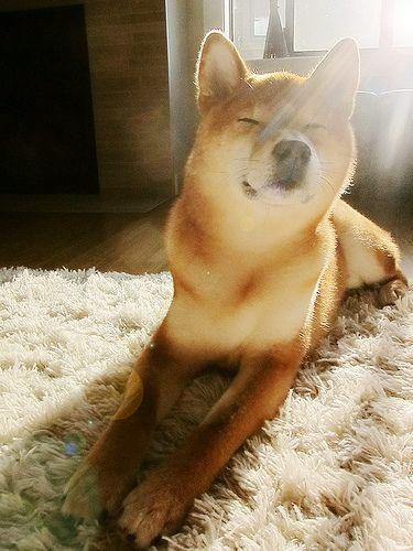 Schäferhund Rassen Übersicht - Schäferhund Rassen Übersicht