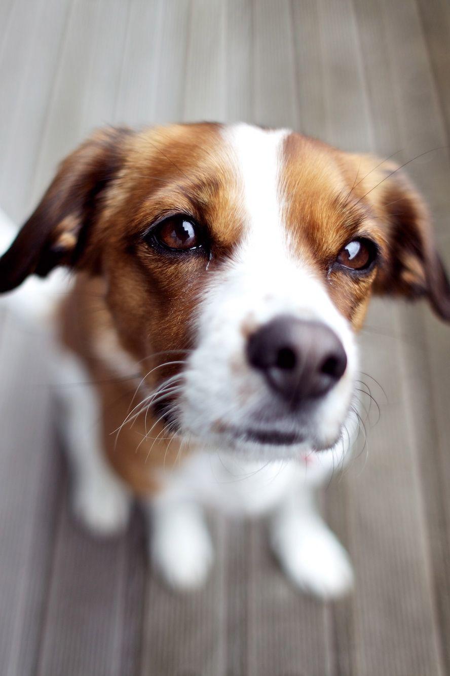 Schäferhund Rassen - Schäferhund Rassen