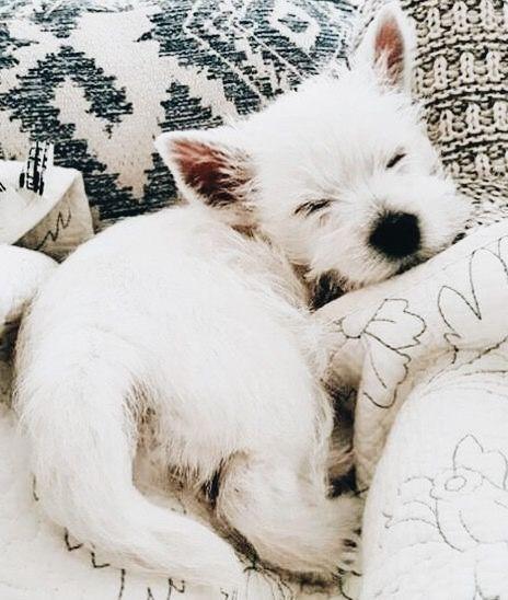 Schöne Bilder Von Hunden Für Facebook - Schöne Bilder Von Hunden Für Facebook