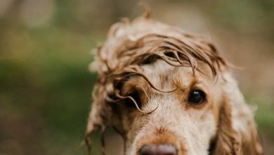 Schöne Bilder Von Hunden Für Whatsapp 390x220 - Schöne Bilder Von Hunden Für Whatsapp