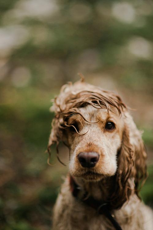 Schöne Bilder Von Hunden Für Whatsapp - Schöne Bilder Von Hunden Für Whatsapp