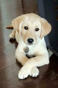 Schöne Bilder Von Hunden Kostenlos 199x300 - Schöne Bilder Von Hunden Kostenlos