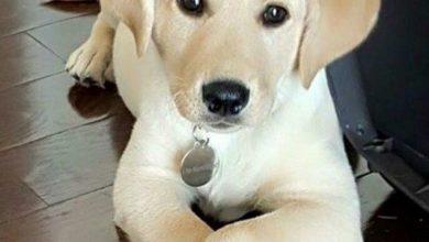 Schöne Bilder Von Hunden Kostenlos 390x220 - Schöne Bilder Von Hunden Kostenlos