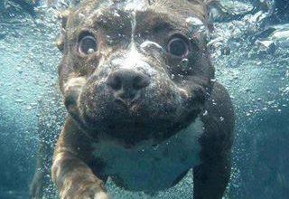 Schöne Hunde Bilder 320x220 - Schöne Hunde Bilder