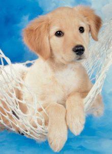 Schöne Hunde Bilder Für Whatsapp 220x300 - Schöne Hunde Bilder Für Whatsapp
