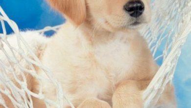 Schöne Hunde Bilder Für Whatsapp 390x220 - Schöne Hunde Bilder Für Whatsapp