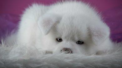 Schöne Hunde Bilder Kostenlos Herunterladen 390x220 - Schöne Hunde Bilder Kostenlos Herunterladen