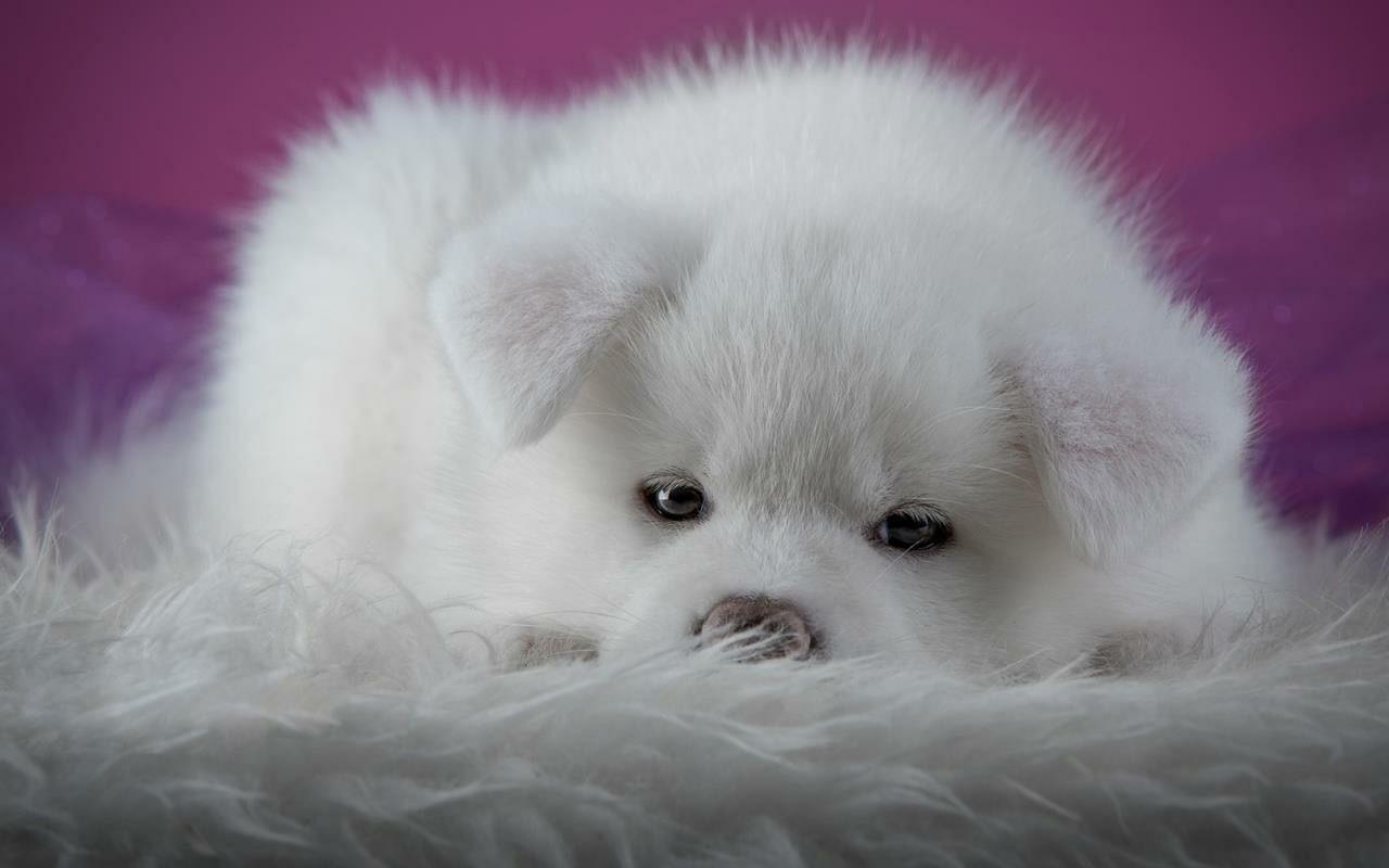 Schöne Hunde Bilder Kostenlos Herunterladen - Schöne Hunde Bilder Kostenlos Herunterladen