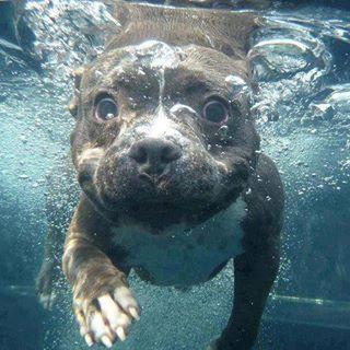 Schöne Hunde Bilder - Schöne Hunde Bilder