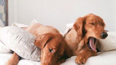 Schöne Hundebilder Für Facebook 390x220 - Schöne Hundebilder Für Facebook