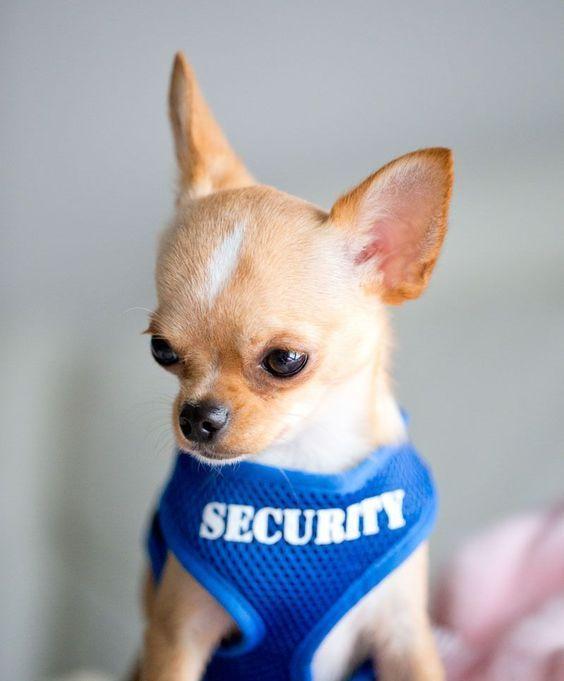 Schöne Hundebilder Für Whatsapp - Schöne Hundebilder Für Whatsapp