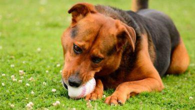 Schöne Hunderassen Bilder Für Facebook 390x220 - Schöne Hunderassen Bilder Für Facebook
