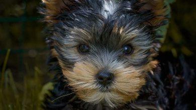 Schöne Hunderassen Bilder Für Whatsapp 390x220 - Schöne Hunderassen Bilder Für Whatsapp