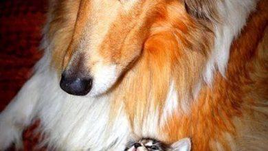 Schöne Hunderassen Bilder Kostenlos 390x220 - Schöne Hunderassen Bilder Kostenlos