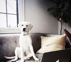 Schöne Hunderassen Bilder Kostenlos Herunterladen 250x220 - Schöne Hunderassen Bilder Kostenlos Herunterladen