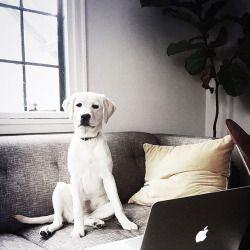 Schöne Hunderassen Bilder Kostenlos Herunterladen - Schöne Hunderassen Bilder Kostenlos Herunterladen