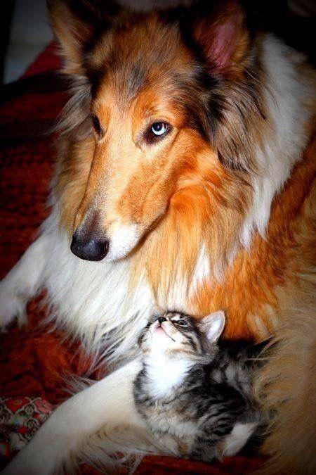 Schöne Hunderassen Bilder Kostenlos - Schöne Hunderassen Bilder Kostenlos