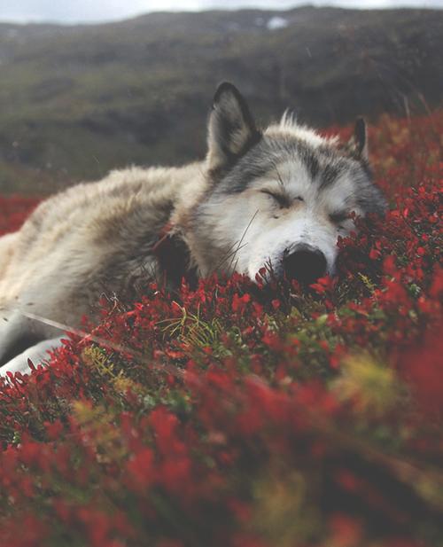 Schöne Hunderassen - Schöne Hunderassen