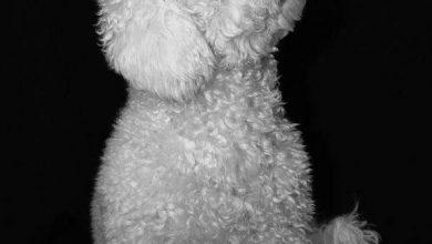 Schöne Mittelgroße Hunde 390x220 - Schöne Mittelgroße Hunde