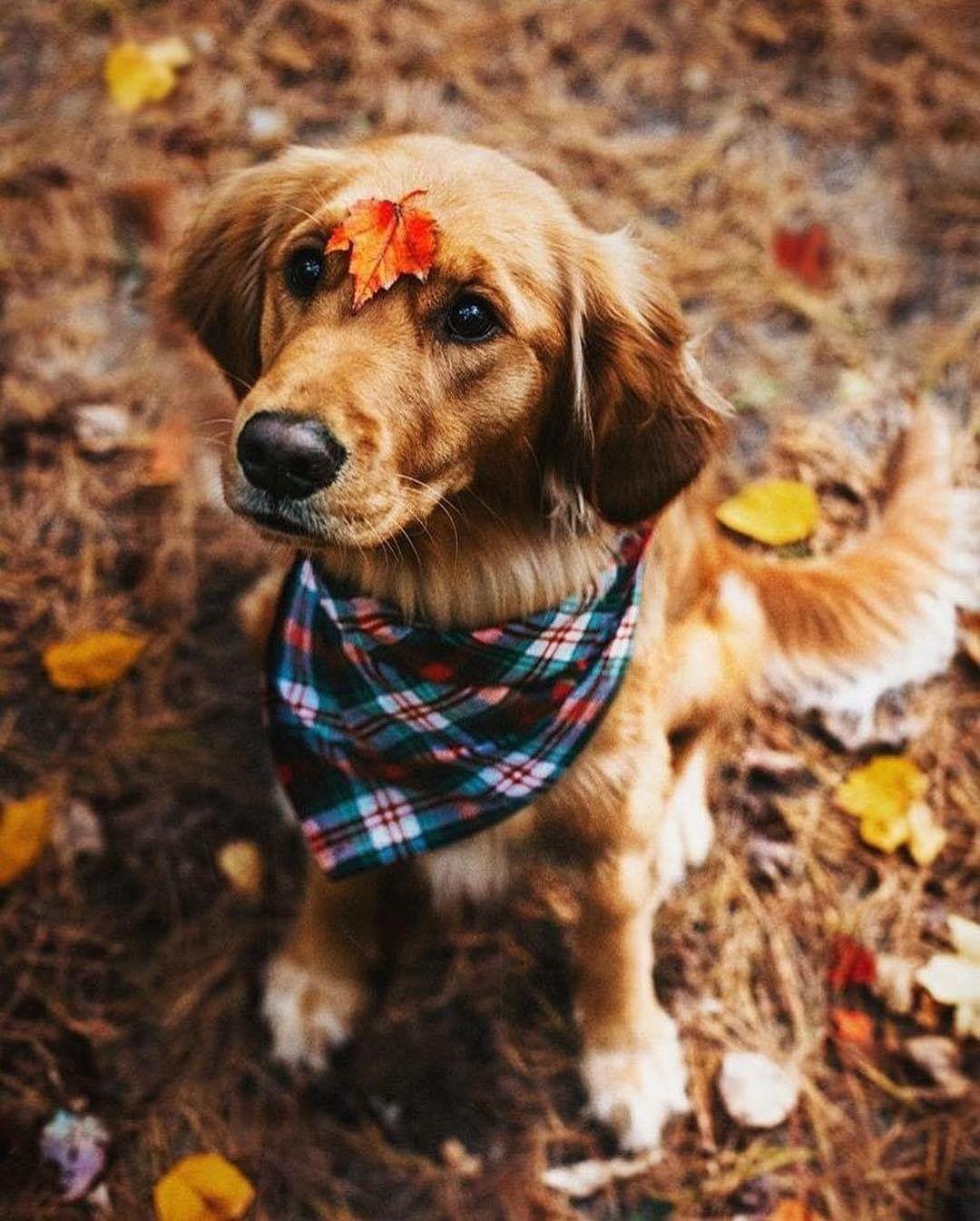 Schoßhunde Hunderassen - Schoßhunde Hunderassen