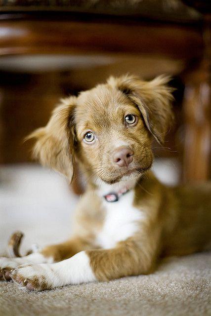 Schoßhunde Rassen - Schoßhunde Rassen