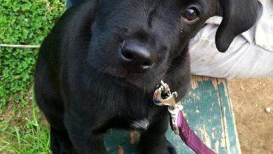 Schwarz Weiß Brauner Hund 390x220 - Schwarz Weiß Brauner Hund