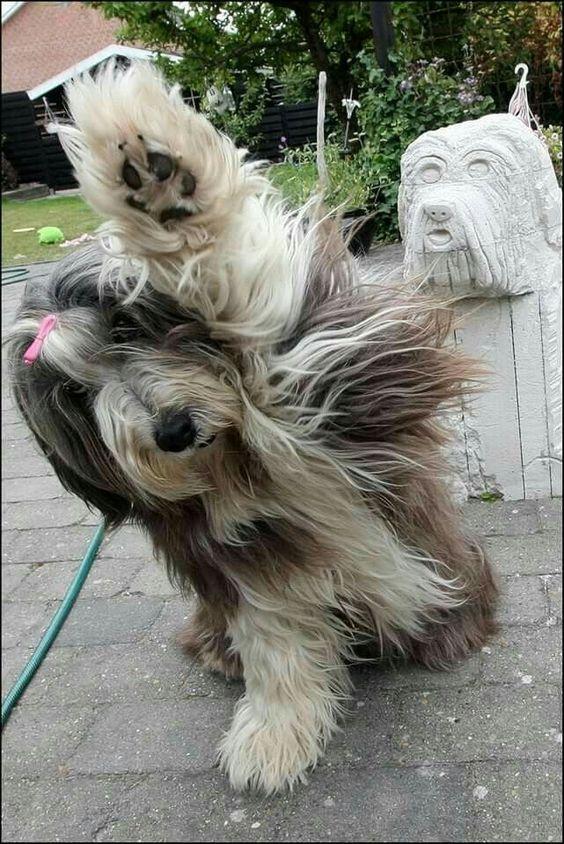 Schwarz Weißer Hund Rasse - Schwarz Weißer Hund Rasse