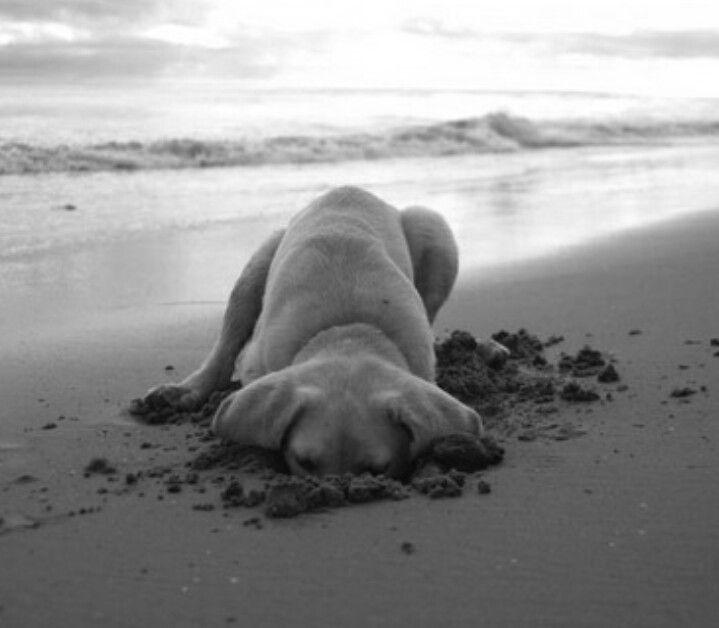Schwarz Weißer Hund - Schwarz Weißer Hund