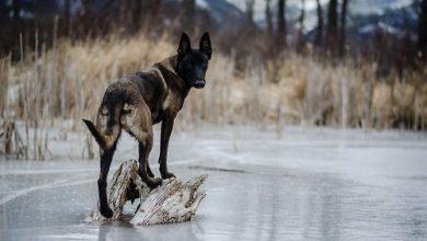 Schwarze Hunde Bilder 390x220 - Schwarze Hunde Bilder