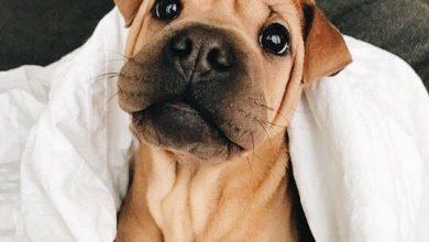 Schwarze Hunde Bilder Für Facebook 390x220 - Schwarze Hunde Bilder Für Facebook