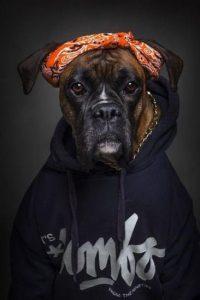 Schwarze Hunde Bilder Kostenlos 200x300 - Schwarze Hunde Bilder Kostenlos
