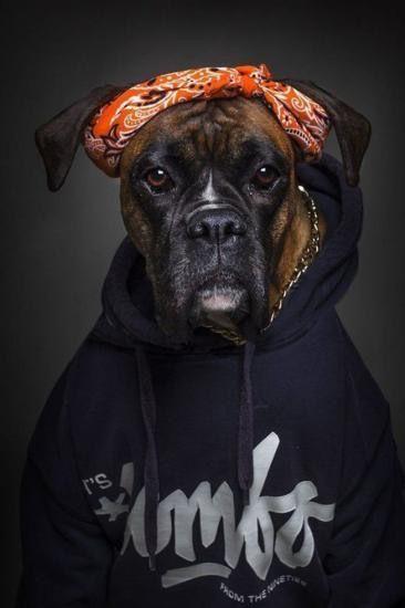 Schwarze Hunde Bilder Kostenlos - Schwarze Hunde Bilder Kostenlos
