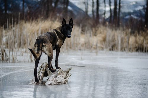 Schwarze Hunde Bilder - Schwarze Hunde Bilder