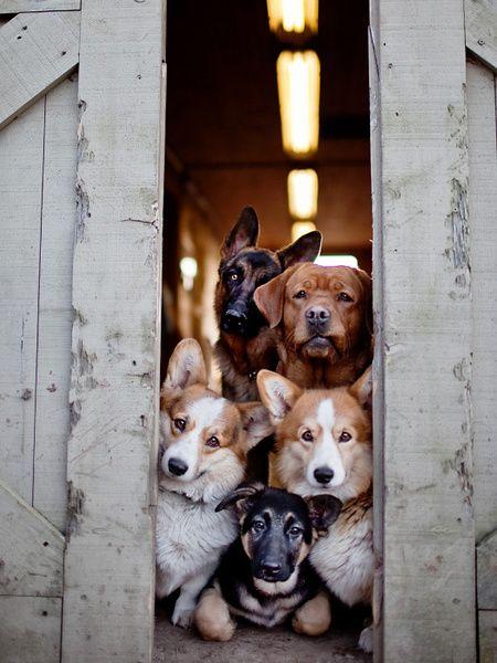 Schweizer Hunderassen Bilder - Schweizer Hunderassen Bilder