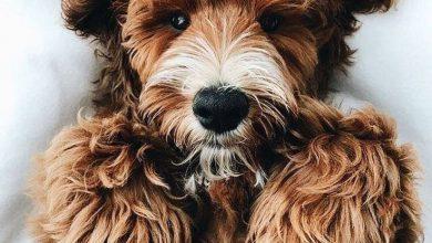 Sehr Kleine Hunderassen Mit Bild 390x220 - Sehr Kleine Hunderassen Mit Bild