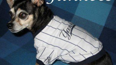 Seltene Hunderassen Mit Bild 390x220 - Seltene Hunderassen Mit Bild