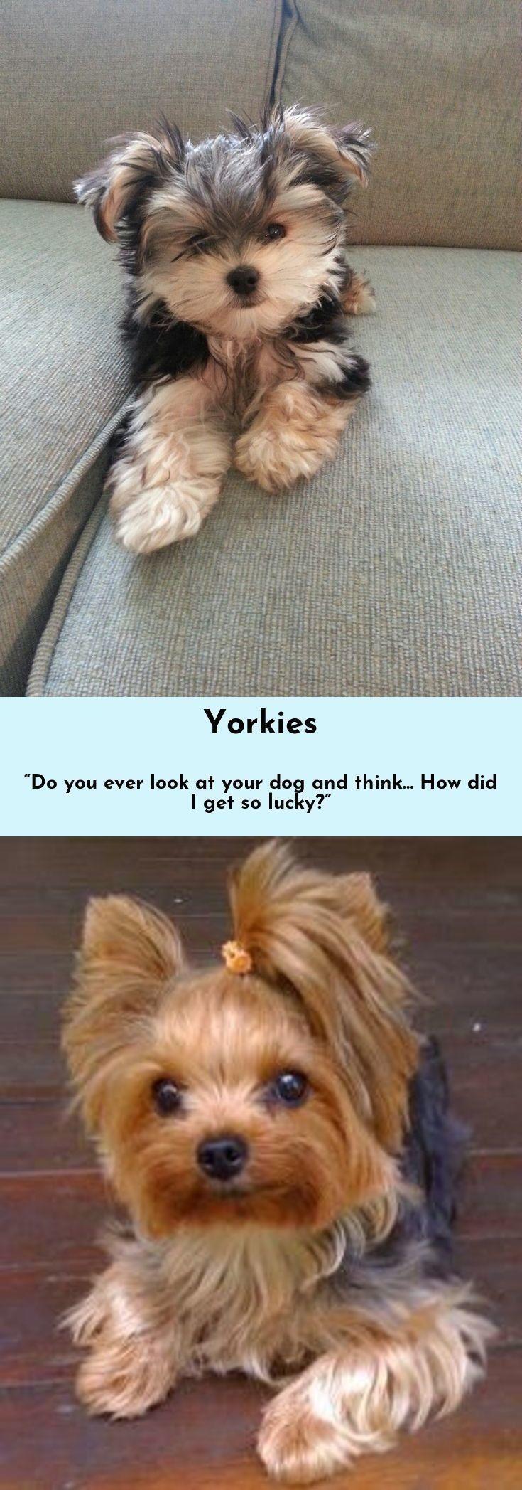 Sprüche Mit Hunden Und Bildern Für Facebook - Sprüche Mit Hunden Und Bildern Für Facebook