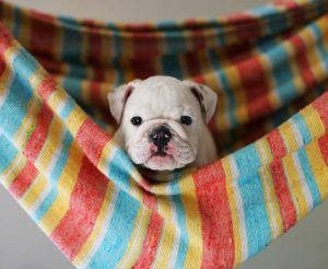 Suche Bilder Von Hunden 300x246 - Suche Bilder Von Hunden