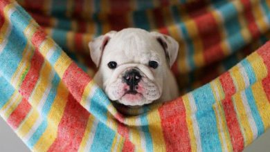 Suche Bilder Von Hunden 390x220 - Suche Bilder Von Hunden