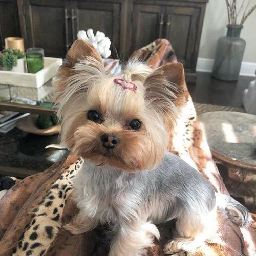 Suche Bilder Von Hunden Kostenlos - Suche Bilder Von Hunden Kostenlos