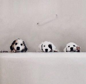 Suche Hund 300x293 - Suche Hund