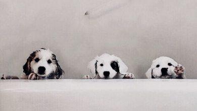 Suche Hund 390x220 - Suche Hund